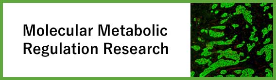 Molecular Metabolic Regulation Research